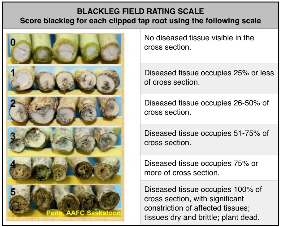 Blackleg-field-rating-scale.jpg