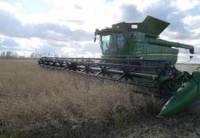 10122014_Straight_Cutting_Canola_in_the_Peace.jpg