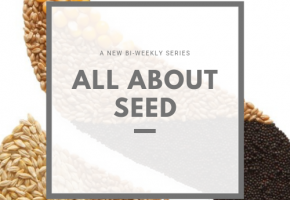 All About Seed Graphic.png
