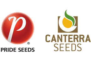 Pride Seeds and CANTERRA SEEDS Partnership