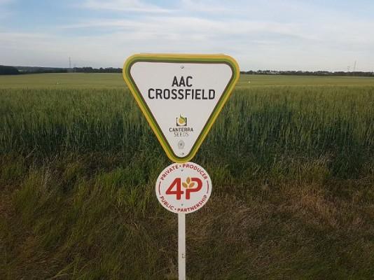 AAC Crossfield.jpeg