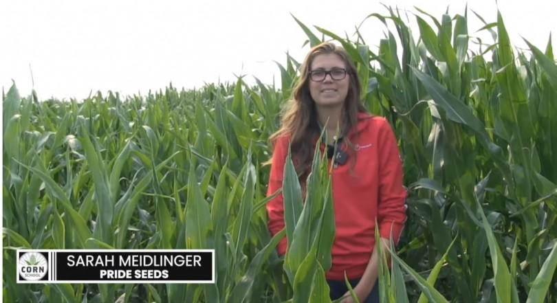 Corn School Episode