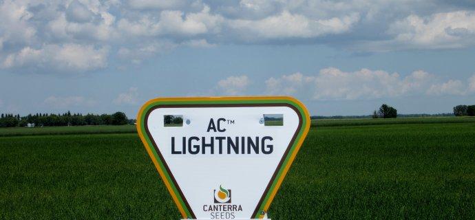 AC_Lightning.JPG