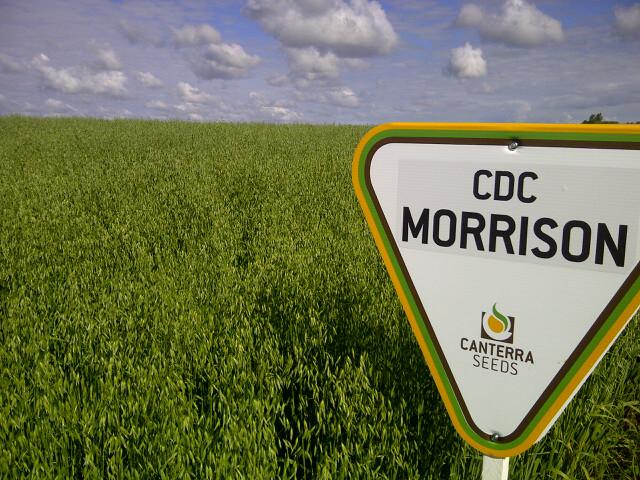 CDC_Morrison-Swerv.jpg
